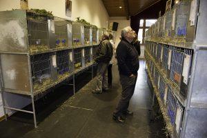 In den lichten Gängen gab es für Kaninchenfreunde genug zum sehen und diskutieren.